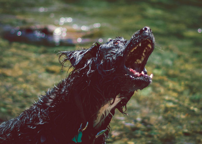 Jaws by Mako Miyamoto Travel and Lifestyle Photography rabid dog teeth