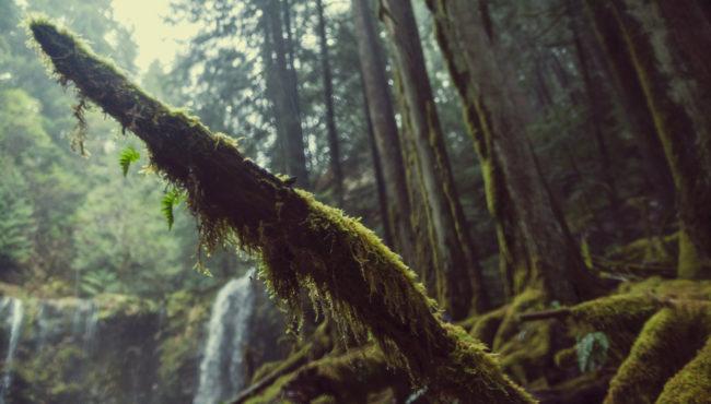 The Emerald Forest Pacific Northwest Oregon Green Moss Mako Miyamoto Photography