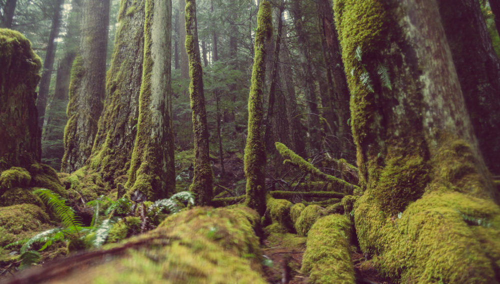 The Emerald Forest Pacific Northwest Oregon Green Moss Mako Miyamoto Photography