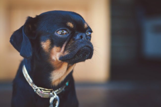 Gremlin by Mako Miyamoto Travel and Lifestyle Photography dog monster