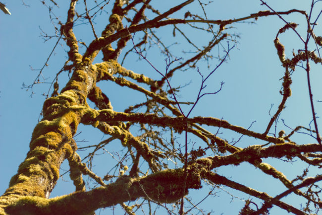 Trees by Mako Miyamoto Travel and Lifestyle Photography tree nature moss green blue